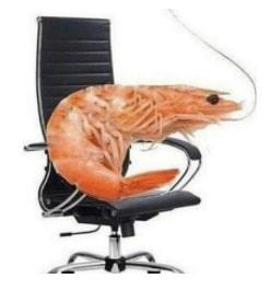 Camarãozinho na cadeira do home office